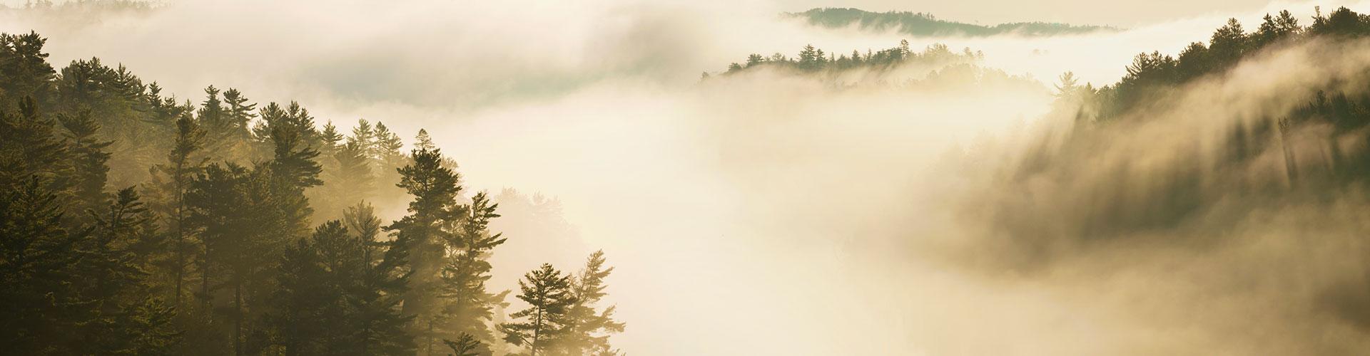 mn-misty-woods